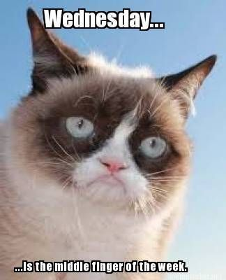 Grumpy Cat Wednesday Meme